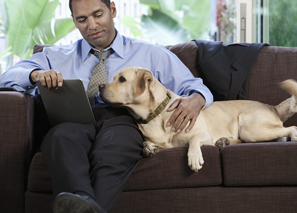 executives with pets Signium Social